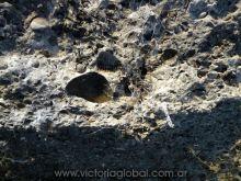 Fósiles originados por el Mar Paranense hace millones de años